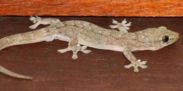 Image result for उल्लू, छछूंदर, चूहा, छिपकली