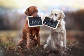 Wish your loved ones Happy New Year with these memorable