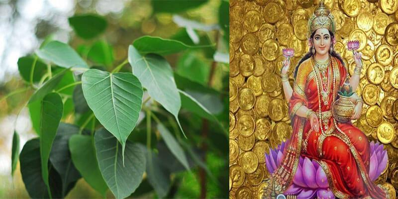 वैज्ञानिक दृष्टि से भी है पीपल का बहुत महत्व, पीपल के निकट यह बिल्कुल न  करें - Sanatanjan | DailyHunt