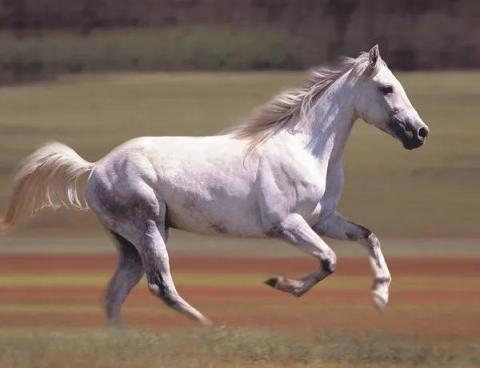 12 जनवरी की सुबह होते ही सफेद घोड़े से भी तेज दौड़ेगा इन 8 राशियों का नसीब,  होगा धन लाभ - Samacharjagat | DailyHunt