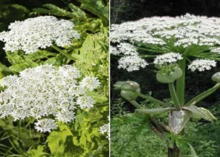 ये है दुनिया का सबसे जहरीला पौधा, केवल छू लेने से हो सकती है मौत - Palpal  India | DailyHunt