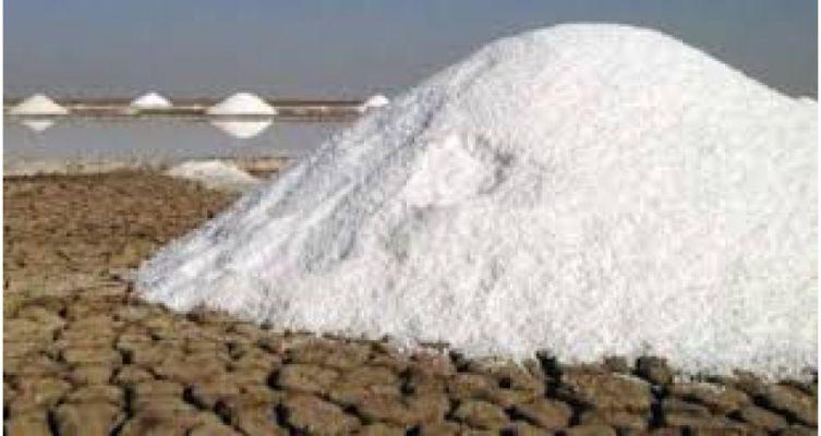 દેલાડ ગામમાં મહાત્મા ગાંધીજીના ભાષણના અંશ: આપણે આ રાક્ષસી સલ્તનત સામે બાથ ભીડી છે, આ તો મીઠાનો મીઠો સંગ્રામ છે