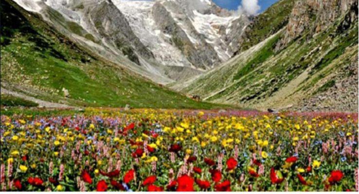 फूलों की घाटी राष्ट्रीय उद्यान, आइए जाने - GS Junction   DailyHunt