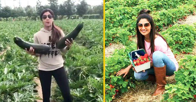 Shilpa Shetty & Family Adopt Vegetarianism As A Way Of Life To ...