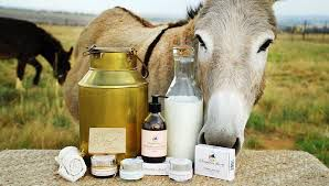 Dairy of donkey milk will start for the first time in the India ...