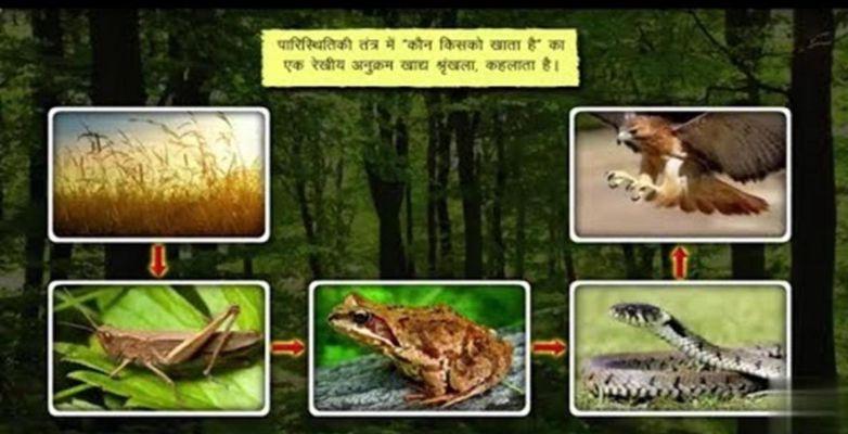 stochastinė prekybos strategija hindi kalba)