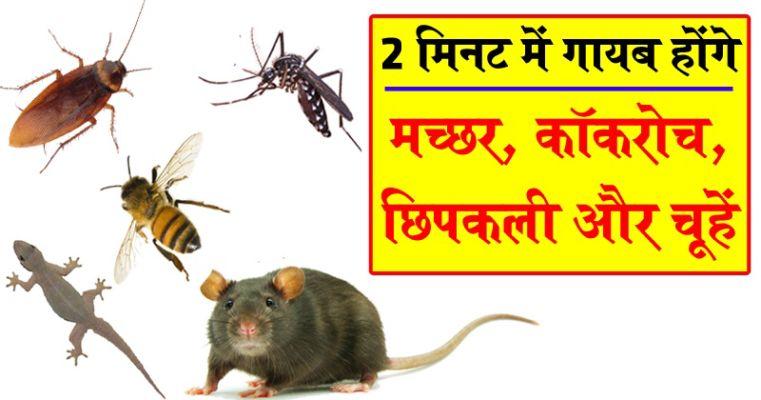 मच्छर, कॉकरोच, छिपकली, चूहों को भगाने के आसान घरेलू उपाय