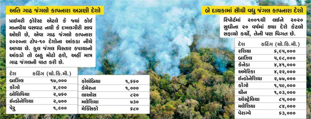 જંગલો કપાતા કોરોના જેવા રોગો વધ્યા