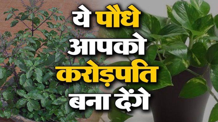 ये 5 पौधे पैसो का पेड़ कहलाते है आप भी लगा सकते है अपने घर में