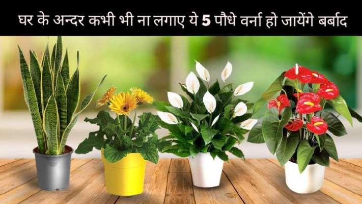 जिस घर में लगे हैं ये 5 पौधे, उसका हर सदस्य हमेशा रहेगा कंगाल