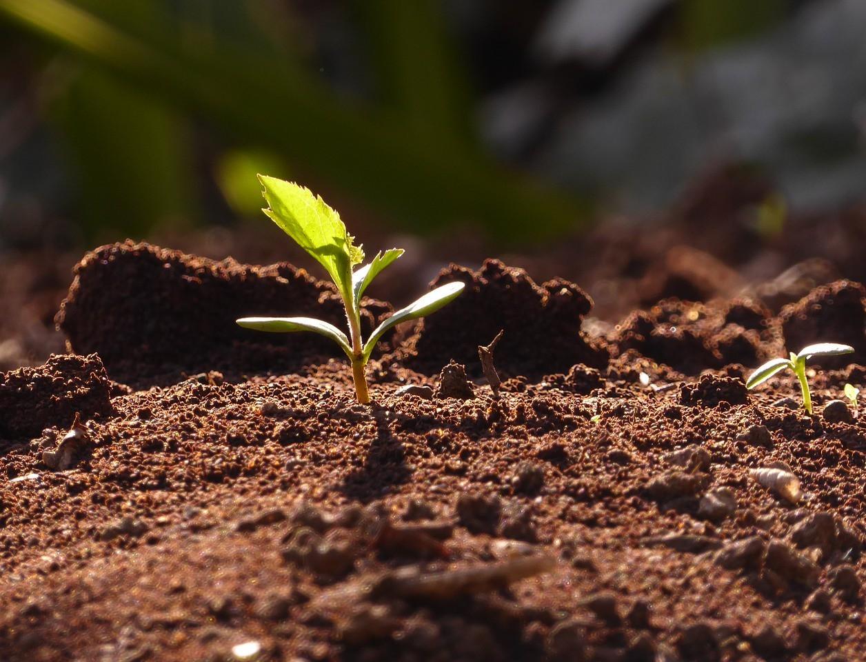 भारत में छह विभिन्न प्रकार की मिट्टी पाई जाती है क्या आप जानते थे.